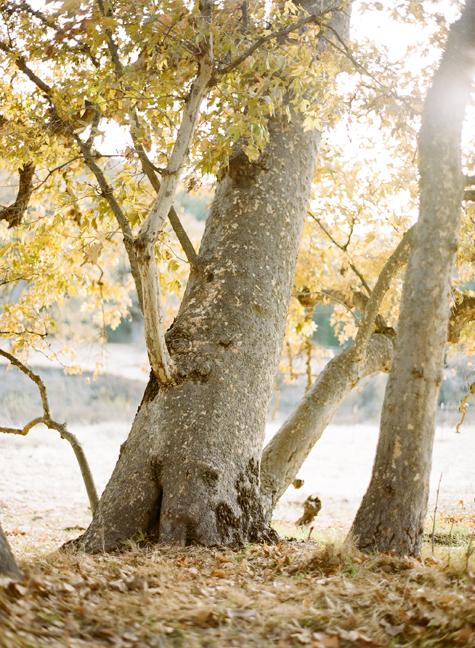 fall-santa-ynez-los-olivos