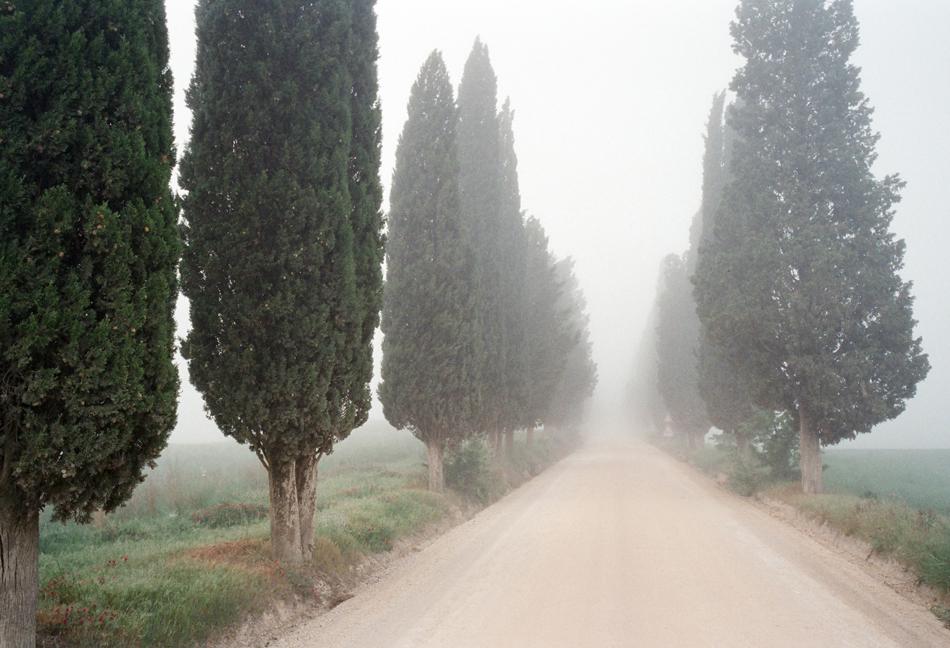 italy-cypress-trees